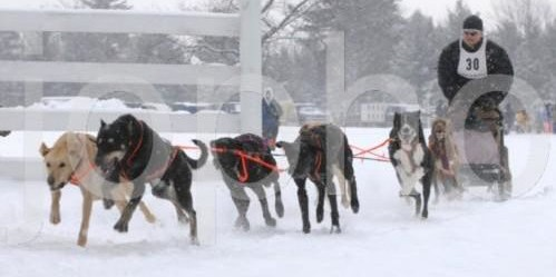 kalkaska winterfest sled dog race
