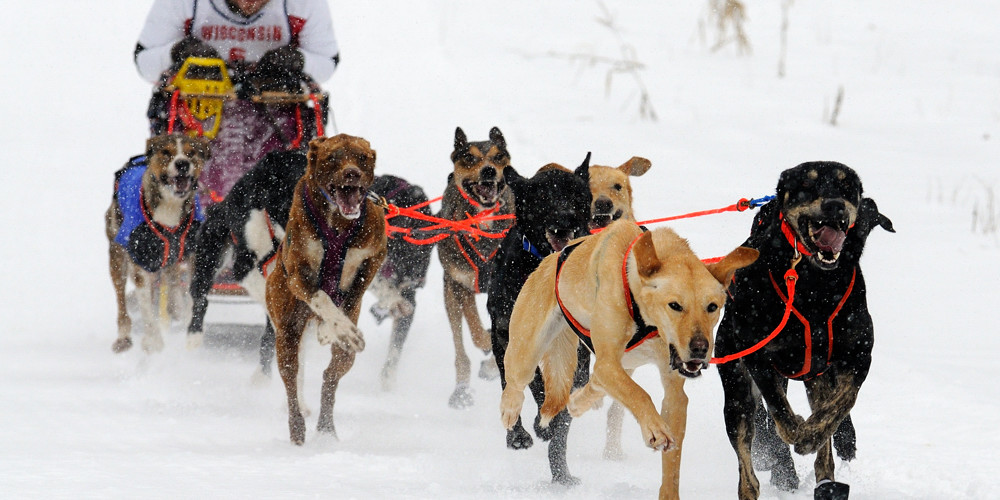 eurohound dog sled racing sled hound cross
