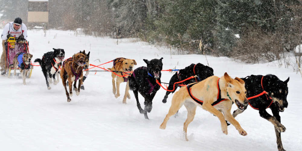 eurohound sled dog racing