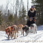 dog sledding duluth mn two harbors rides sled