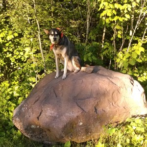 toivo and his weather rock