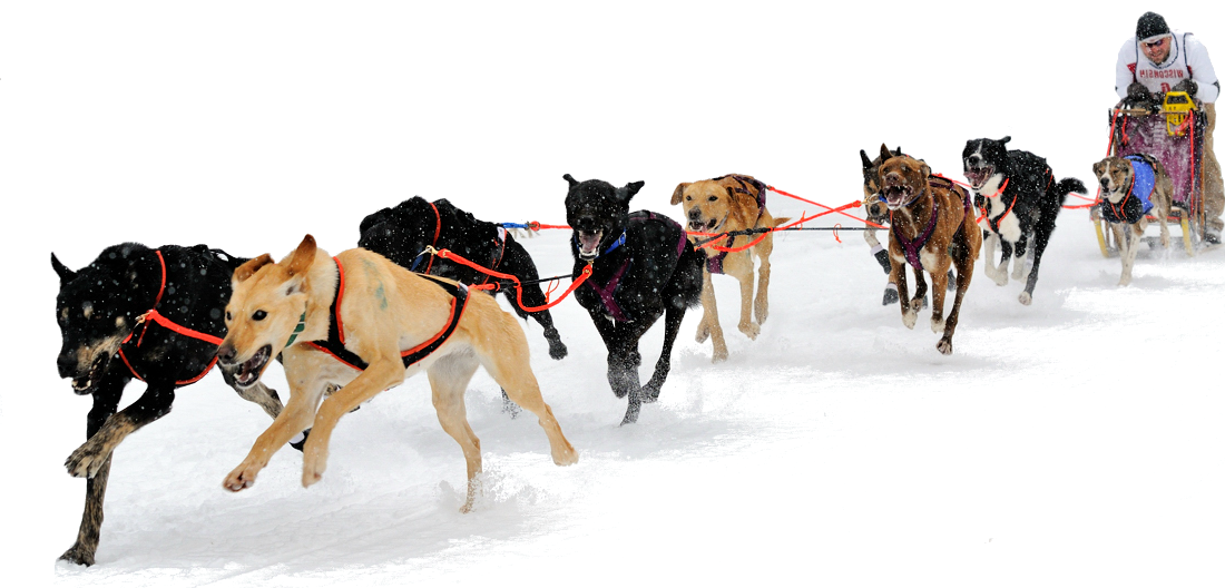 Sprint Dog Sled For Sale