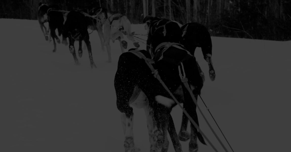 dog sled rides and tours