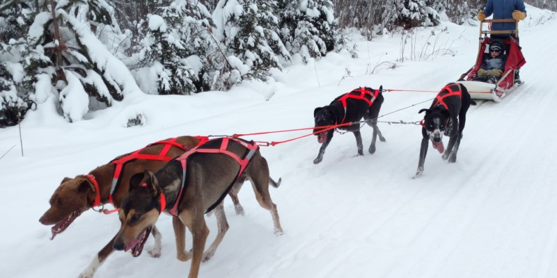 dog sledding duluth mn two harbors ely boundary waters