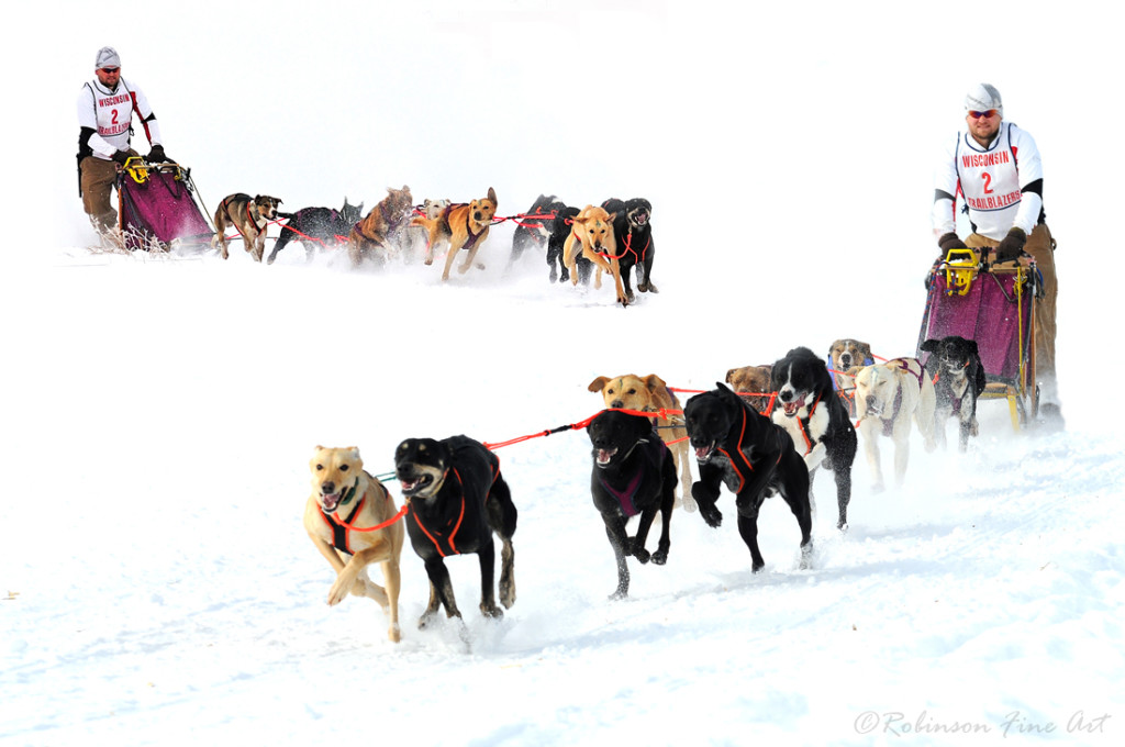 eurohound sled dog racing endurance kennels sprint fast for sale breed tone coughlin