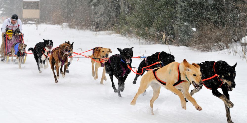 Sprint Dog Sled For Sale