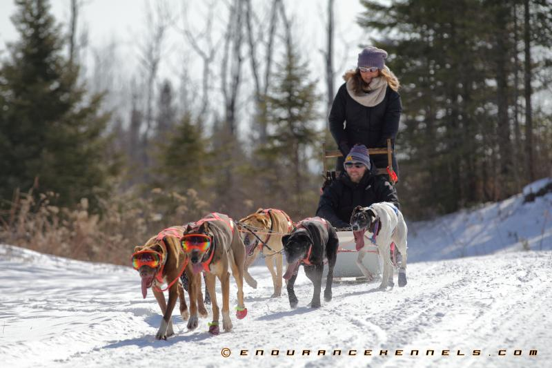 dog sledding duluth minnesota endurance kennels