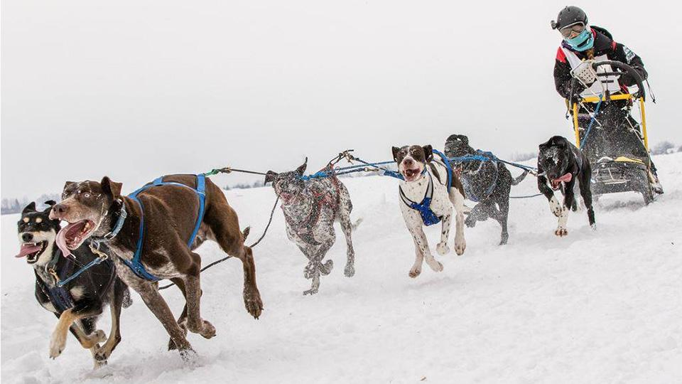 sled dog racing eurohound sprint