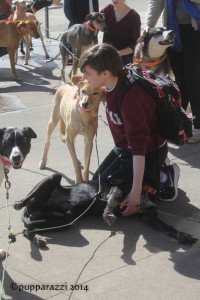 dogs at school college pet away stress students