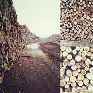 wood harvesting logging off the grid