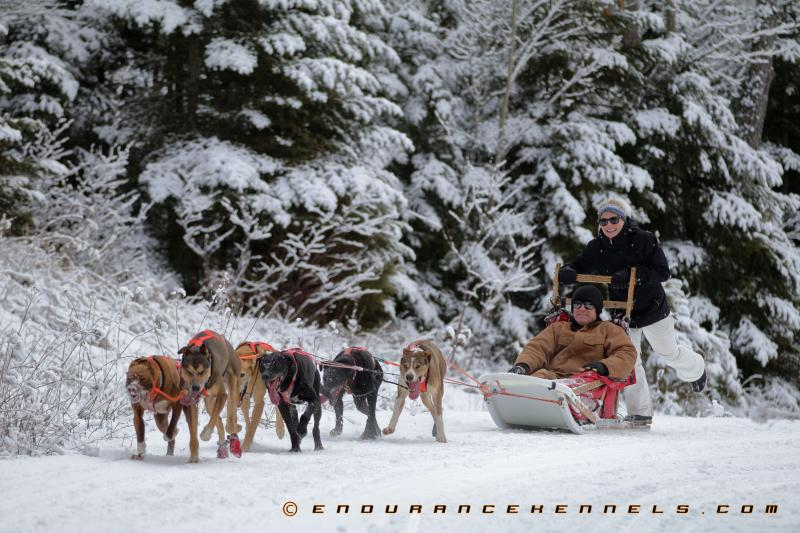 dog sledding minnesota mn duluth two harbors team dogs