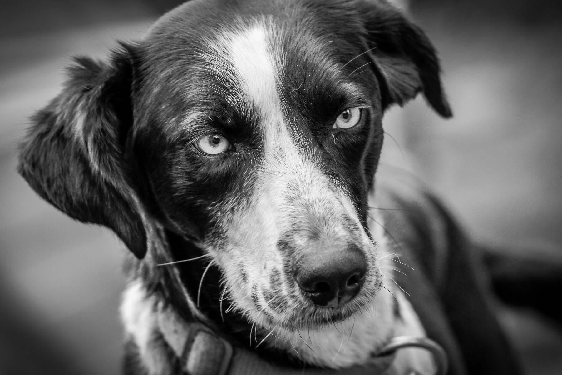 Dog Kennels Ely